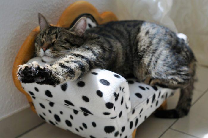 ストレス無くリラックスした猫の画像