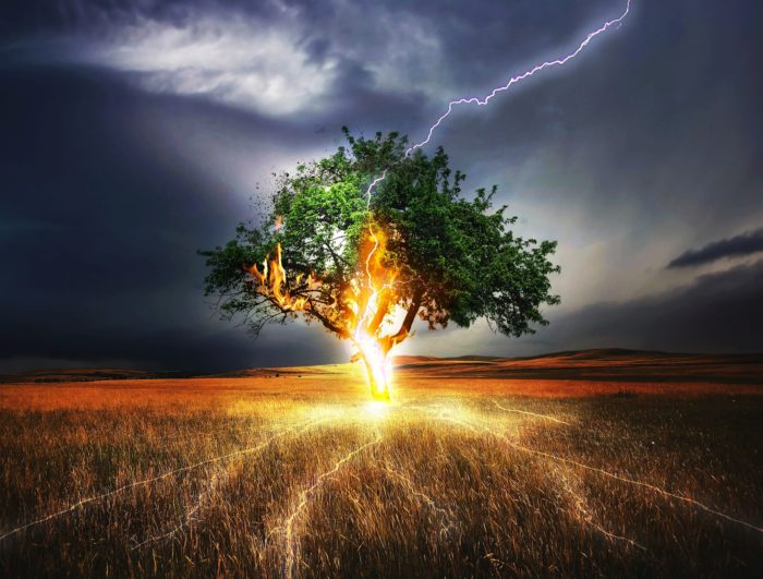 木への落雷で影響がでるイメージ